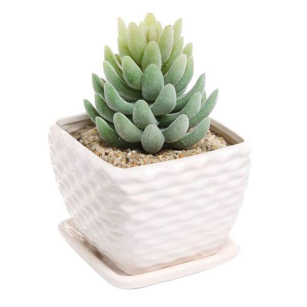 Contemporary White Ceramic Succulent Planter Flower Pot
