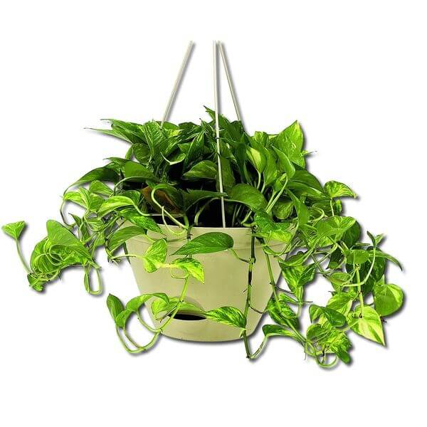 Misco Flare Hanging Planter