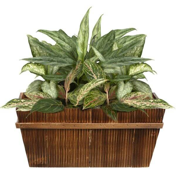 16-inch Decorative Country Rustic Wooden Flower Pot