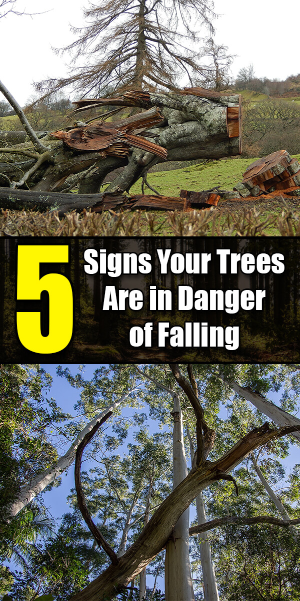 5 Signs Your Trees Are in Danger of Falling - Golly Gee Gardening