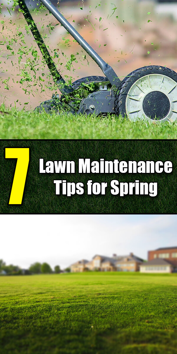 7 Lawn Maintenance Tips for Spring - Golly Gee Gardening