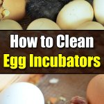 How to Properly Clean Your Chicken Egg Incubators - Golly Gee Gardening