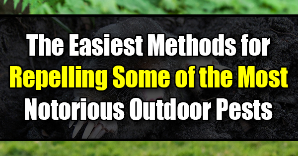 The Easiest Methods for Repelling Some of the Most Notorious Outdoor Pests - Golly Gee Gardening