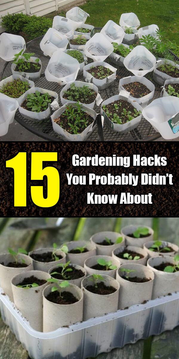 15 Simple Gardening Hacks You Probably Didn't Know About - Golly Gee Gardening