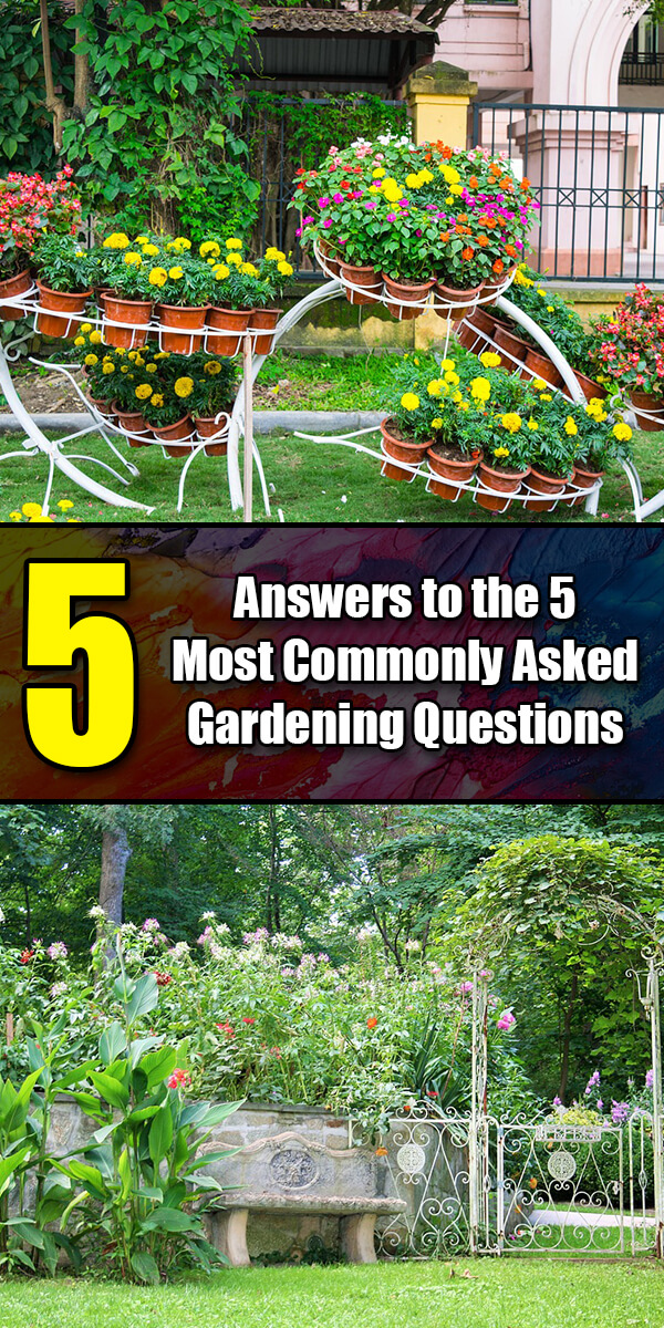 5 Answers to the 5 Most Commonly Asked Gardening Questions - Golly Gee Gardening