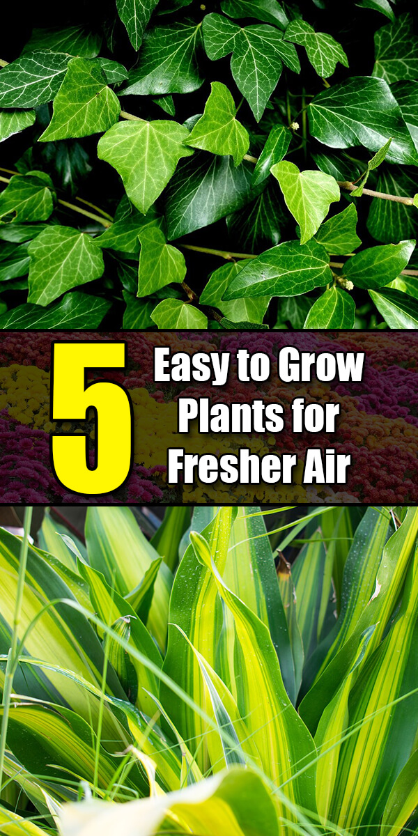 5 Easy to Grow Plants for Fresher Air - Golly Gee Gardening