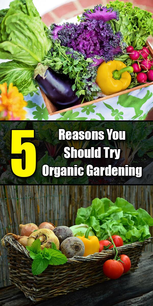 5 Reasons You Should Try Organic Gardening - Golly Gee Gardening