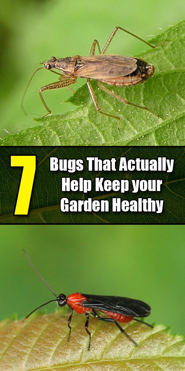 7 Bugs That Actually Help Keep your Garden Healthy - Golly Gee Gardening