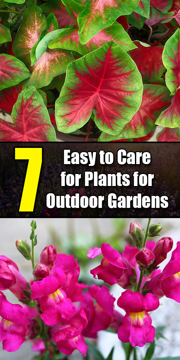 7 Easy to Care for Plants for Outdoor Gardens - Golly Gee Gardening
