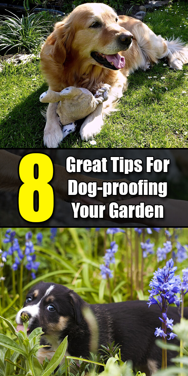 8 Great Tips For Dog-proofing Your Garden - Golly Gee Gardening
