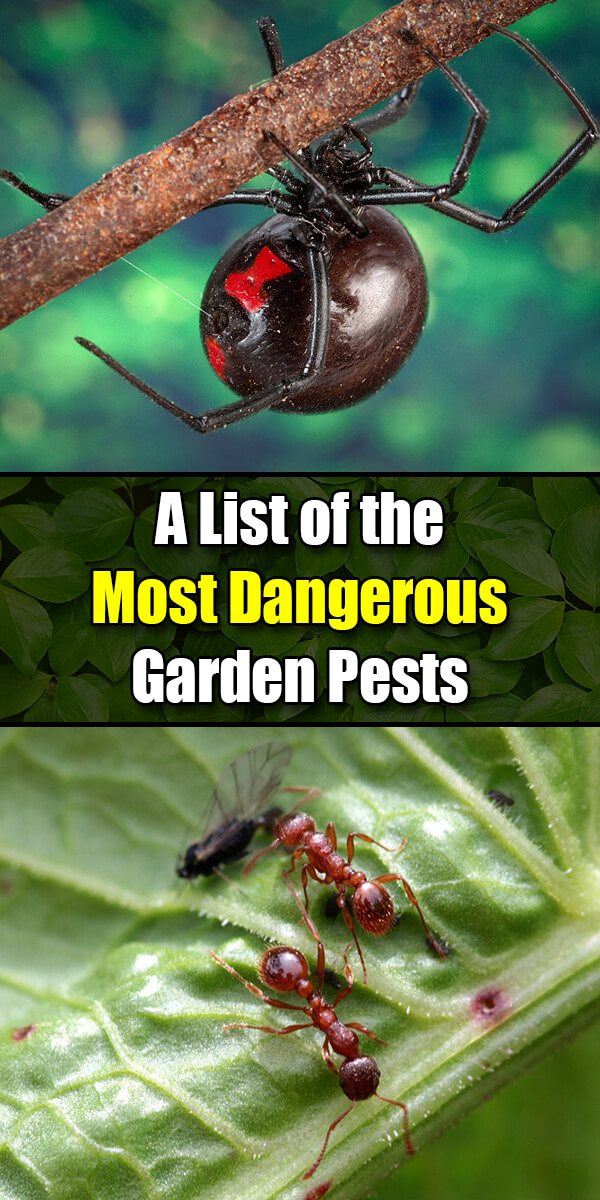 A List of the Most Dangerous Garden Pests - Golly Gee Gardening