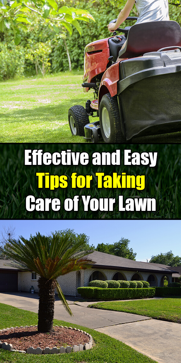 Effective and Easy Tips for Taking Care of Your Lawn - Golly Gee Gardening
