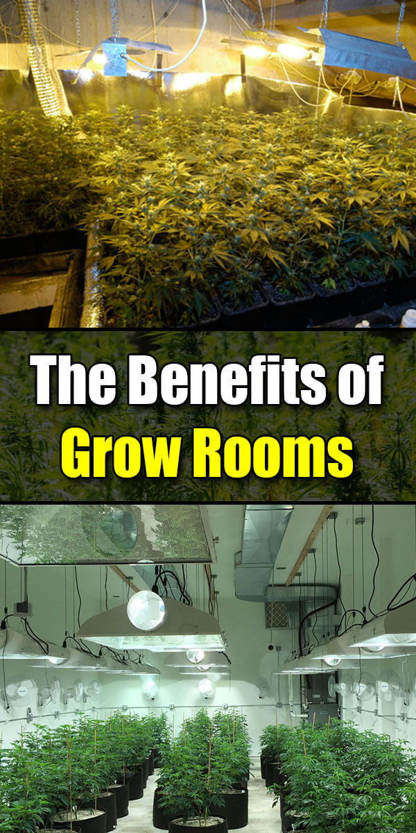 Grow Rooms and Their Benefits - Golly Gee Gardening