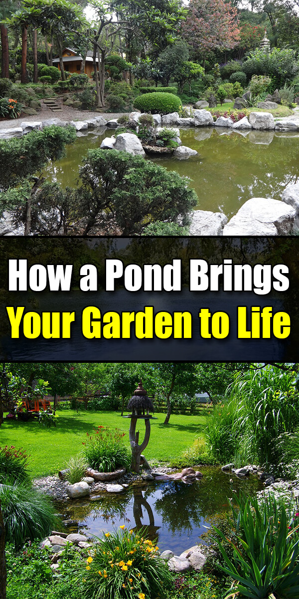 How a Pond Brings Your Garden to Life - Golly Gee Gardening
