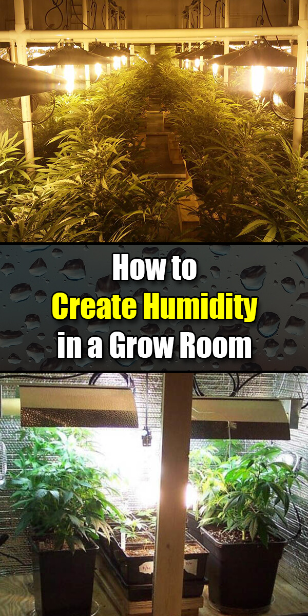 How to Create Humidity in a Grow Room or Grow Tent - Golly Gee Gardening