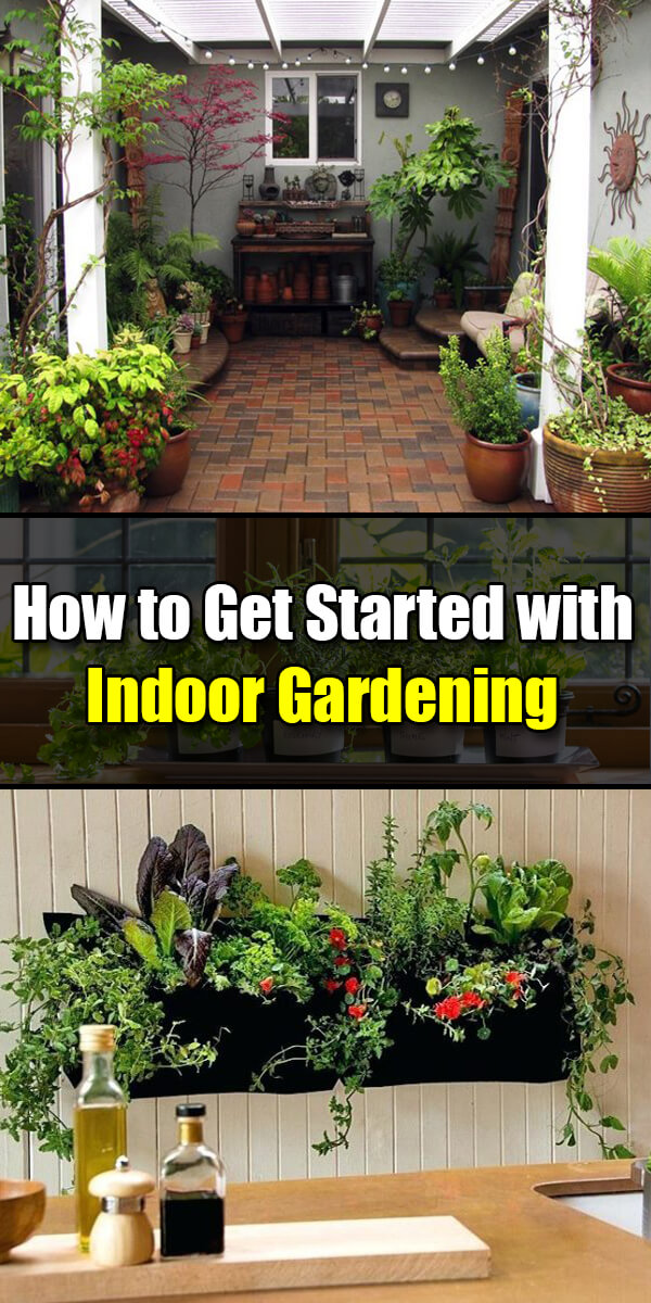 How to Get Started with Indoor Gardening - Golly Gee Gardening