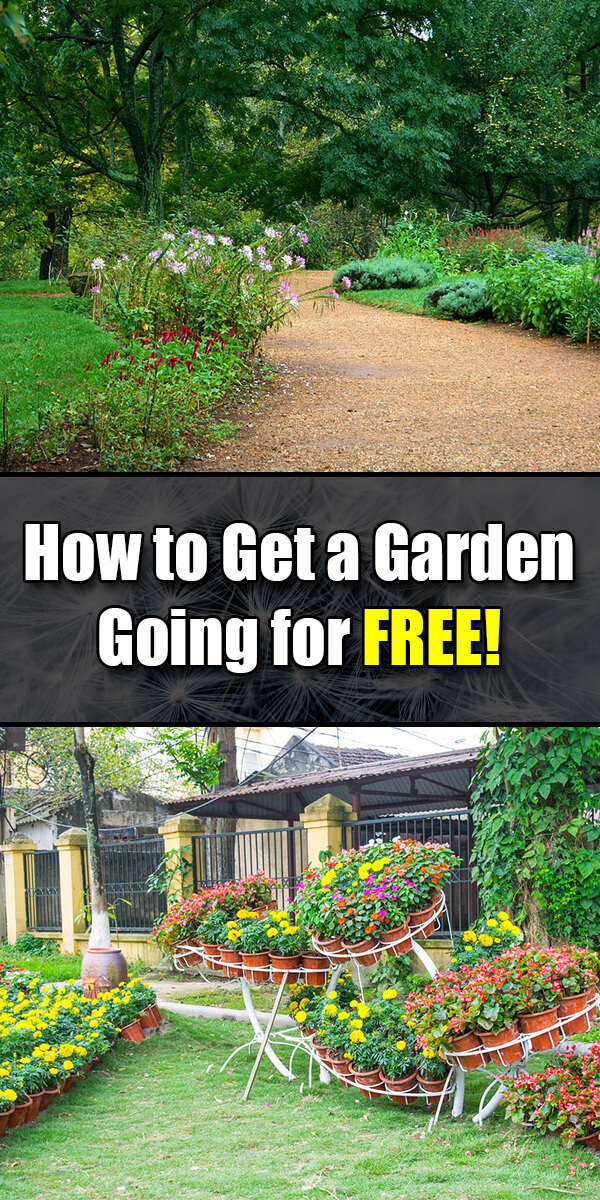 How to Get a Garden Going for FREE! - Golly Gee Gardening