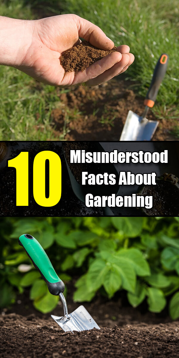 The 10 Most Misunderstood Facts About Gardening - Golly Gee Gardening