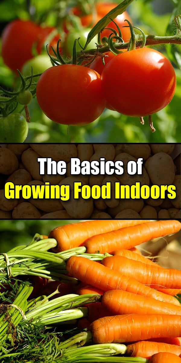 The Basics of Growing Food Indoors - Golly Gee Gardening