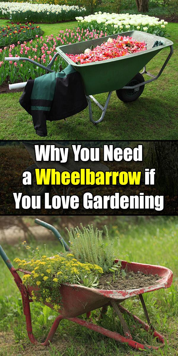 Why You Need a Wheelbarrow if You Love Gardening