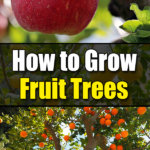 Growing Fruit Trees 101: The Basics