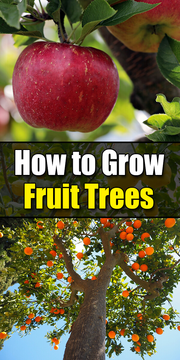 Growing Fruit Trees 101: The Basics